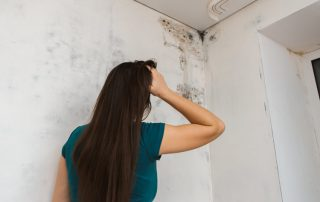Certified WSF Mold Prevention Removal Remediation