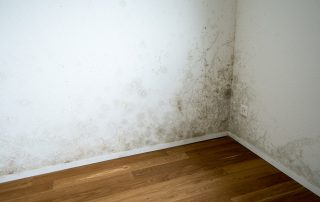Mold Damage Remediation Cleanup